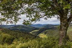 Aussicht-vom-Herhagen-4