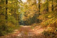 Herbstwald-Almert