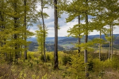 Buchenwald oberhalb von Oberkirchen