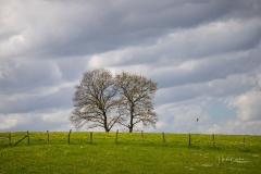 Baum-Paar in Grafschaft
