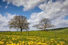Alten Eichen in Grafschaft