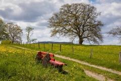 Grafschaft im Frühjahr