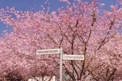 Kirschblüte-Mollseifen