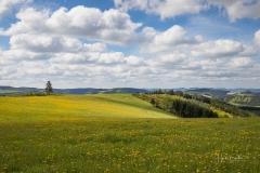 Mönekind-Frühjahr-050