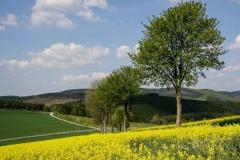 sauerland-fruehling-005