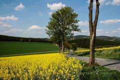 sauerland-fruehling-006