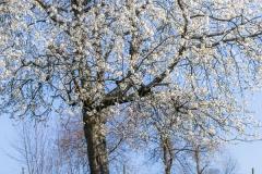 sauerland-fruehling-3