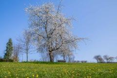 sauerland-fruehling-4