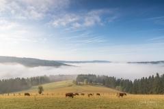 Blick von Langewiese ins Odeborntal