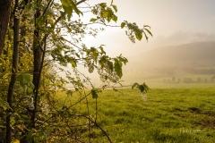 Morgendunst-Werpe-1