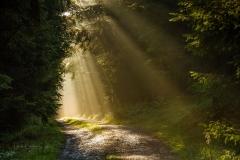 Wald-im-Morgendunst-6