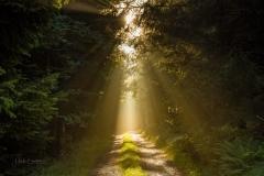 Wald-im-Morgendunst-5