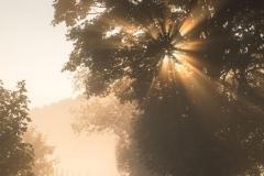 Nebel_Schmallenberg_092021_04