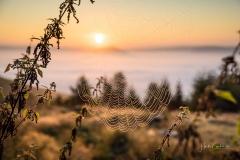 Nebel_Schmallenberg_092021_10