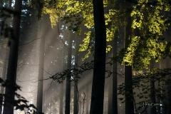Nebel_Schmallenberg_092021_19