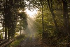 Wald-im-Morgendunst-3