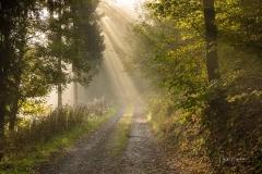 Wald-im-Morgendunst-4