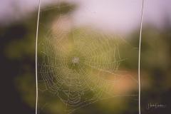 Wenn-der-Tag-anbricht-025Sonnenaufgang, Sauerland, Frühnebel, Nebel, Gegenlicht, Morgendunst, Morgensonne, Nebel, Sauerland, Sonnenstrahlen, Blaue Stunde, Goldene Stundem, Sonnensternchen, Herbst, Altweibersommer, Spinnennetz