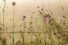 Sommerblumen im Morgenlicht
