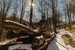 schluchten-brueckenpfad-winterberg-002