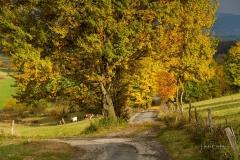 Herbst-in-Herschede-2