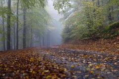 Schmallenberger-Sauerland-Herbst-03