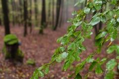 Schmallenberger-Sauerland-Herbst-09