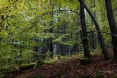 Schmallenberger-Sauerland-Herbst-11