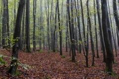 Schmallenberger-Sauerland-Herbst-12