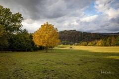 Schmallenberger-Sauerland-Herbst-16