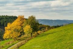 Wanderweg in Altenilpe
