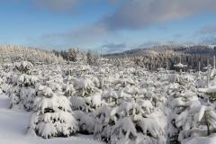 schwedensteig-heidenstrasse-winter-16