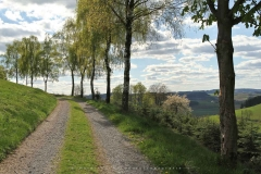 Sellinghausen 37