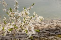 Sorpesee-Frühling-07