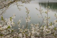Sorpesee-Frühling-08