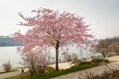 Sorpesee-Frühling-30