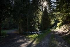 Waldskulpturenweg Hexenplatz-Oberkirchen-2