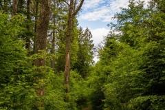 Waldskulpturenweg-Fruehsommer-2021-05
