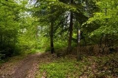 Waldskulpturenweg-Fruehsommer-2021-06