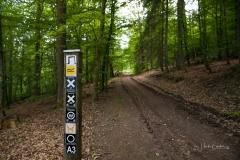Waldskulpturenweg-Fruehsommer-2021-09