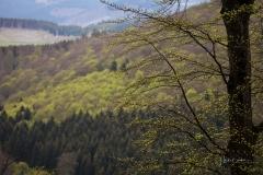 Waldskulpturenweg-Mai-2021-02