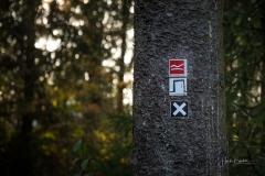 Waldskulpturenweg kreuzt Rothaarsteig in Schanze 1