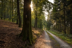 Waldskulpturenweg zwischen Oberkirchen und Schanze 3