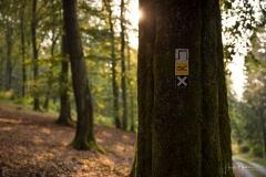 Waldskulpturenweg zwischen Oberkirchen und Schanze 4