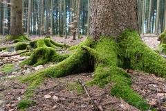 Waldskulpturenweg zwischen Oberkirchen und Schanze 6