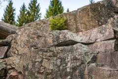 Waldskulpturenweg - Stein-Zeit-Mensch 6