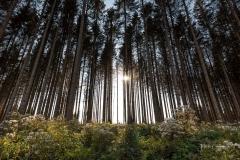 Waldskulpturenweg zwischen Goldenem Ei und Grünstation