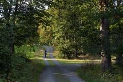 Waldskulpturenweg bei Kühhude 4