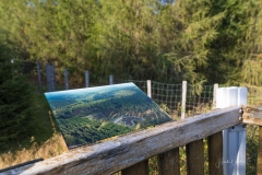 Waldskulpturenweg - Der Falke 3