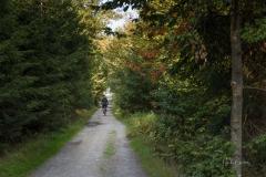 Waldskulpturenweg zwischen Kühhude und Schanze 2